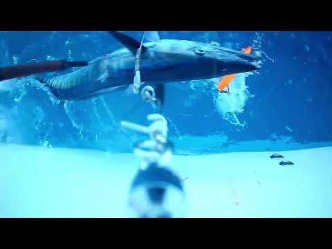 VIDEO:  Wahoo Fishing Underwater Strike on Desperado Series Lure